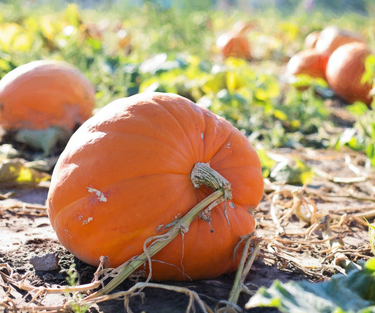 Pumpkins, Apples and Mums...Oh My!